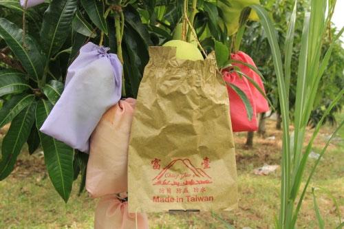túi bọc trái cây làm đổi màu quả xoài theo túi